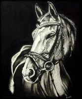 Horse Portrait. by Arunava-Art