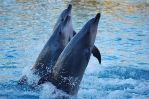 Dolphins at Seaworld 3 by DanielleMiner