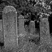summerwind over the graves by augenweide