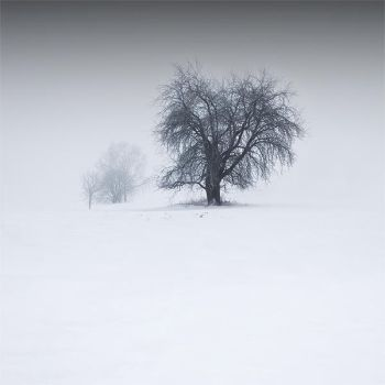 winter ent by cez4r