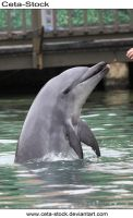 Dolphins 27 by Ceta-Stock