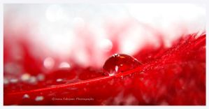 Red droplet by ironicna