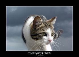 Storm behind cat by lmsmith