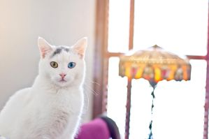 Winnie the Heterochromic Kitty V by MarthaTuma