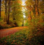 Colours of October by mindreader-x