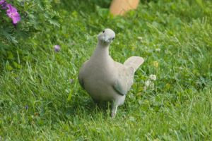 Posing Turtledove by YunaHeileen