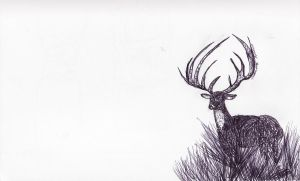 Stag II by amirroredshadow