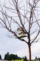 Bird House in the Sky by xSweet-blasphemyx