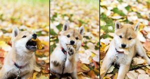 I Caught a Leaf by miss-beibei