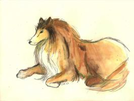 Collie by alicoe