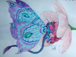 orchid flutter by chaosia