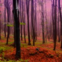 Bukki Nemzeti magic forest by rhipster