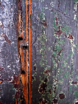 weathered church door by tamh