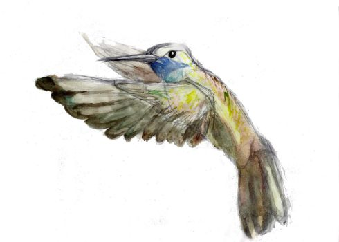 Hummingbird Watercolor Study by Rocklaw