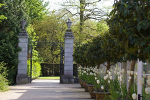 Clivden White Tulips Gate by Eiande