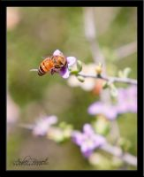 Bee on Flower by kittykitty5150