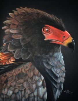 Bateleur by Helilise