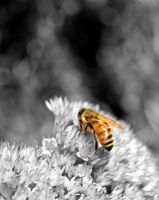 Busy Bee by SkizzleFrenick