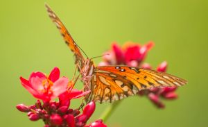 Butterfly1-4838 by RickDunlap2