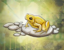 Golden Mantella Frog by charfade