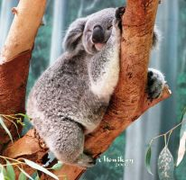 Sleepy, dreamy, Koala by Monikaygifts