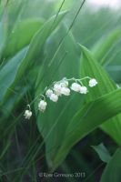 Lily Of The Valley by Passion4Photos