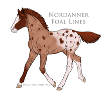 Nordanner Foal 4228 by CrazyBrit88
