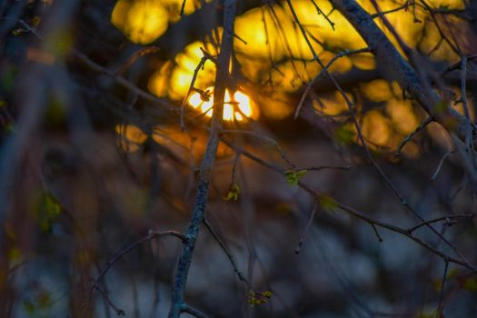 Sunset Through The Trees by RyanHousing