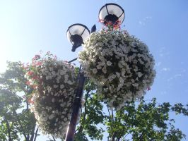 London Globe Theatre Flowers by TheFlyingHeart
