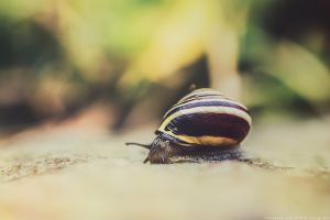 snail by CliffWFotografie