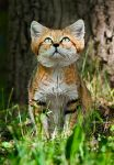 The Sand Cat II by PictureByPali