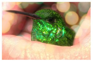 Hummingbird by byCavalera