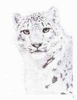 Snow Leopard WIP 3 by mikebontoft