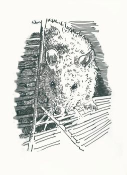Rat pet (sketch#10) by Ymadness