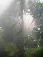 Misty Greenhouse by Serendith