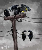 Crow talk by cme