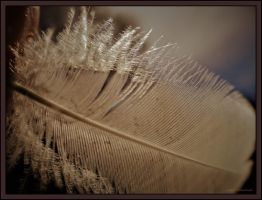 Feather..... by gintautegitte69