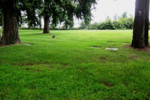 Spruce II @ Mt View Cemetery in Lakewood by zypherion