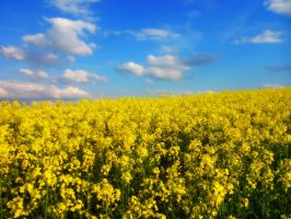 blue over yellow by Mittelfranke