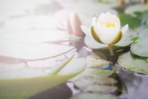 Sunset on the Lilies by AppareilPhotoGarcon