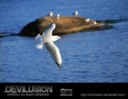 IMG_5040 by D3vilusion