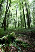 Im Wald 4 by man-of-faith