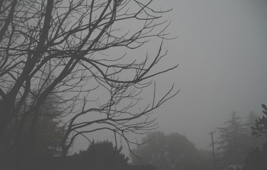Winter Trees in Fog by theworst24