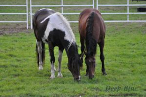 Two Horses by DeepBluePhotography