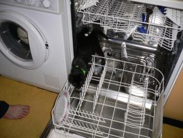 cat in the dishwasher I by ChaosStocks