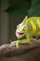 Crazy Chameleon by DiNoDrAwEr