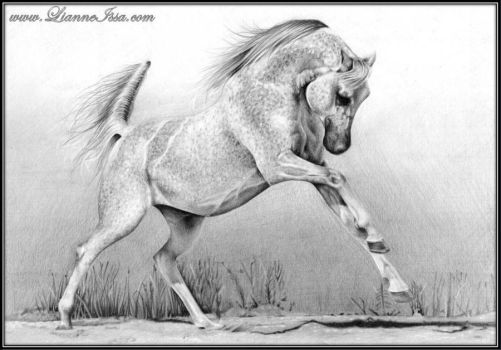 Horse study by Lianne-Issa