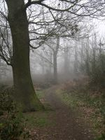 Foggy Trail 2 by stevesm-stock