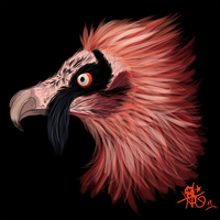 OB: Bearded Vulture by STEAMRAVE