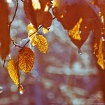 Autumn's leaves by cameraflou